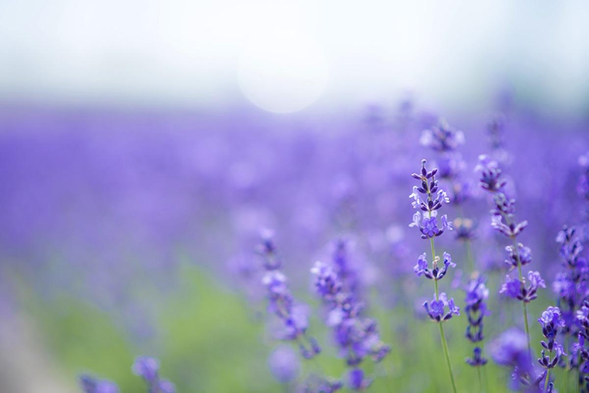 flower01