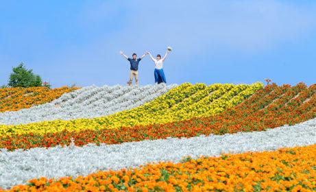 美瑛四季彩の丘 お花畑カップル