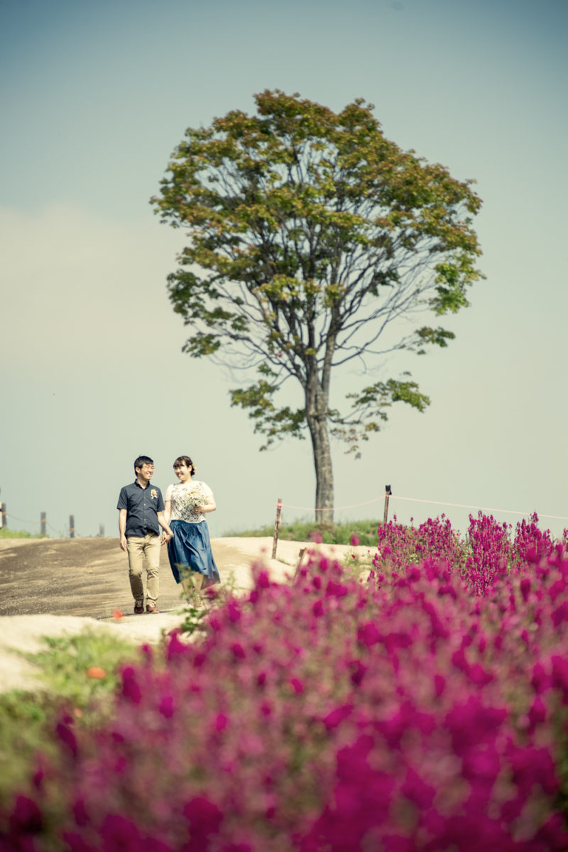 美瑛四季彩の丘 お花畑でロケーションフォト